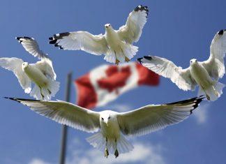 Canada Europe réglementation de l'architecture