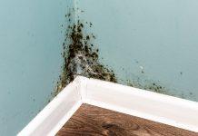 projet de norme sur moisissures dans les habitations